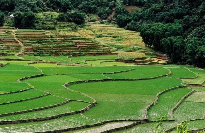 Ruộng bậc thang ở thung lũng Lũng Vân