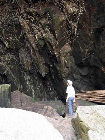 Đảo Yến Cù Lao Chàm